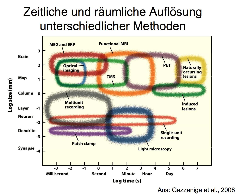 Grafik: Methoden der Neurowisssenschaft