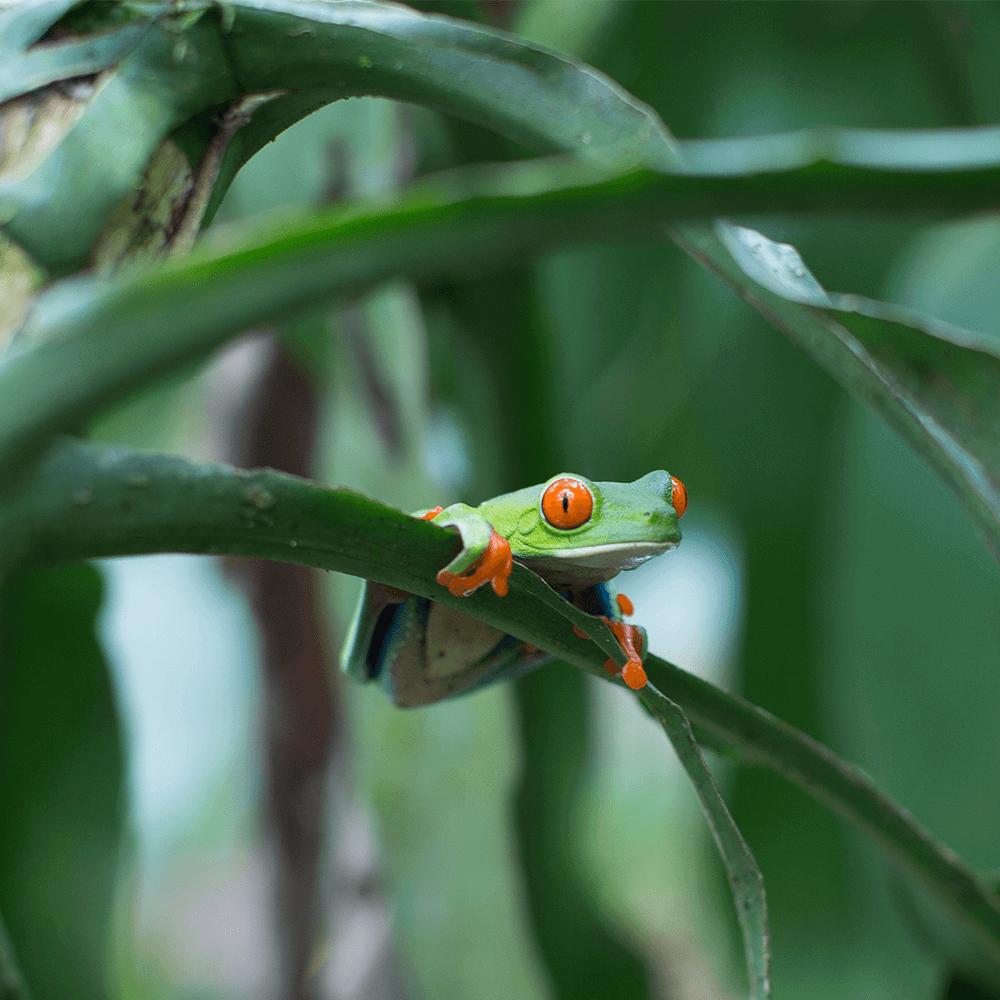 Bild: Frosch